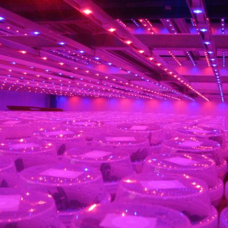 LED Growleuchten
